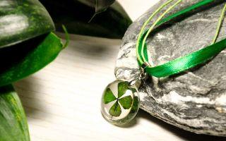Четырехлистный клевер: значение талисмана на удачу