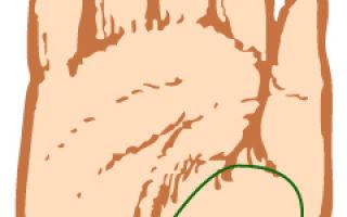 Холм венеры на ладони: значение линий на руке