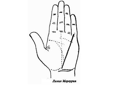 Холм Меркурия на руке: значение бугорка на ладони в хиромантии