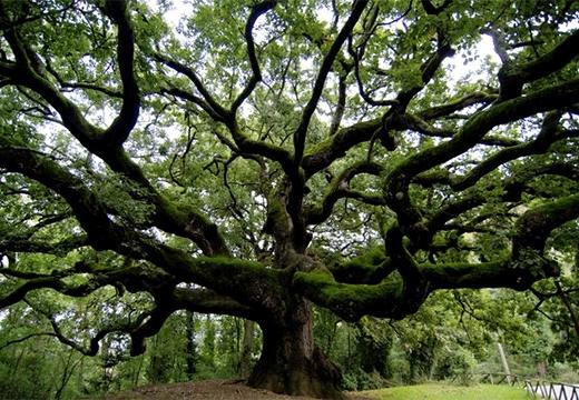 Магические свойства деревьев: розмарина и других растений