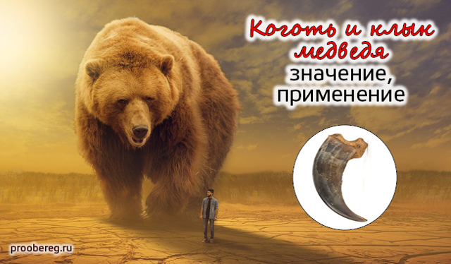 Медвежий коготь оберег: значение и как изготовить