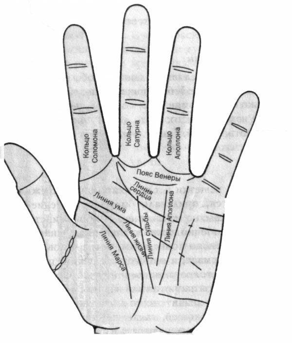Пояс Венеры на руке у женщин: значение в хиромантии