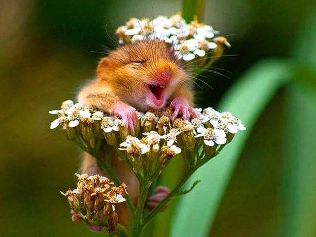 Мантра радости ун та ли: как достичь безграничного счастья
