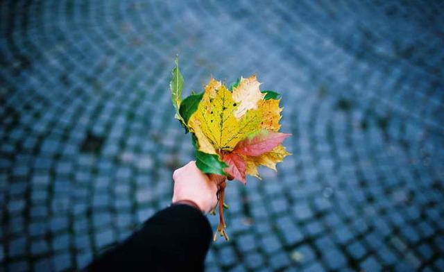 Гадание берендеев: ворожба на листьях деревьев