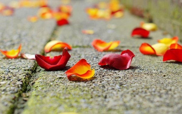 Гадание по лепесткам роз: пошаговая инструкция
