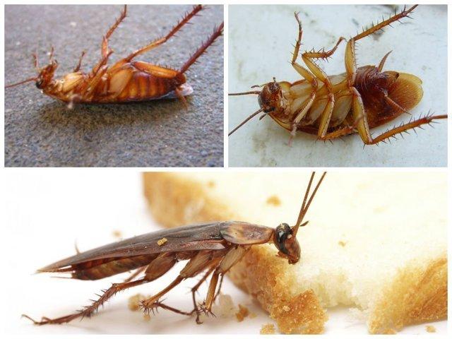 Заговор от тараканов: заклинания чтобы избавиться раз и навсегда