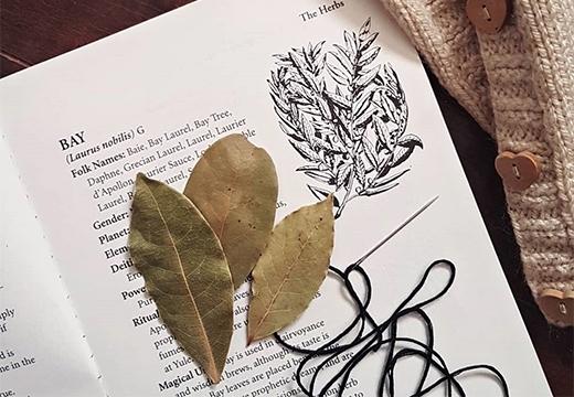 Лавровый лист: магические свойства от сглаза и порчи